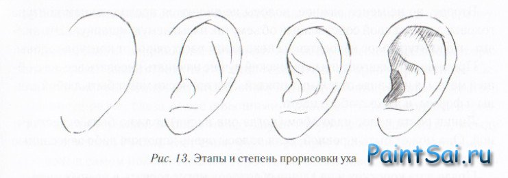 Рисуем ухо губы