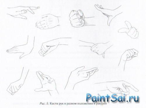 Как рисовать Кисть руки аниме